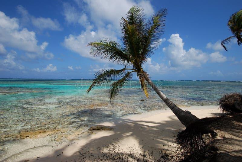 Palmier sur la plage image libre de droits