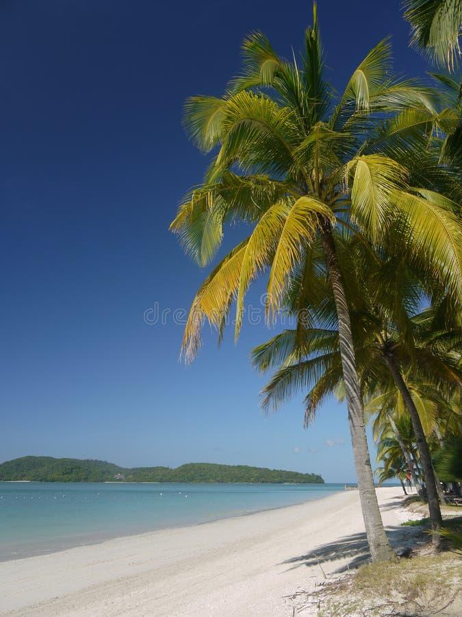 Palmier sur la plage tropicale photos stock