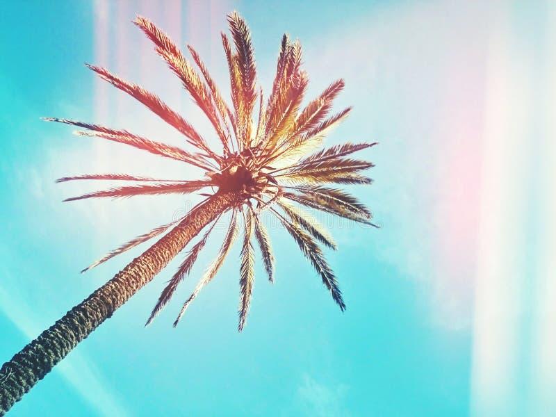Palmier sur le fond de ciel bleu avec le bokeh coloré à la mode images libres de droits