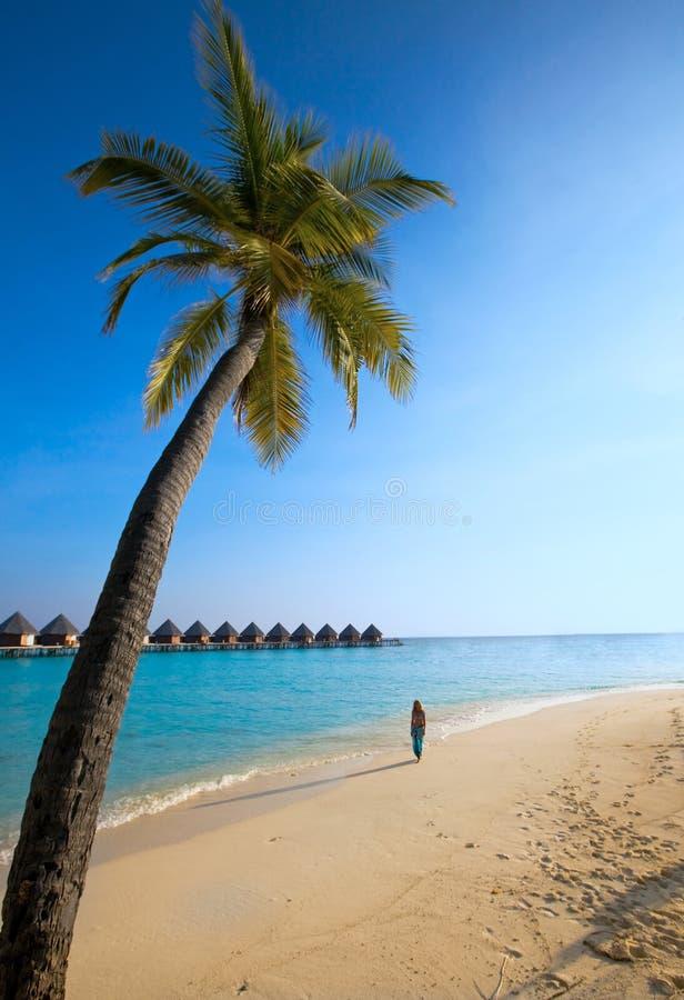Palmier sur le fond de l'océan et la silhouette de photo libre de droits