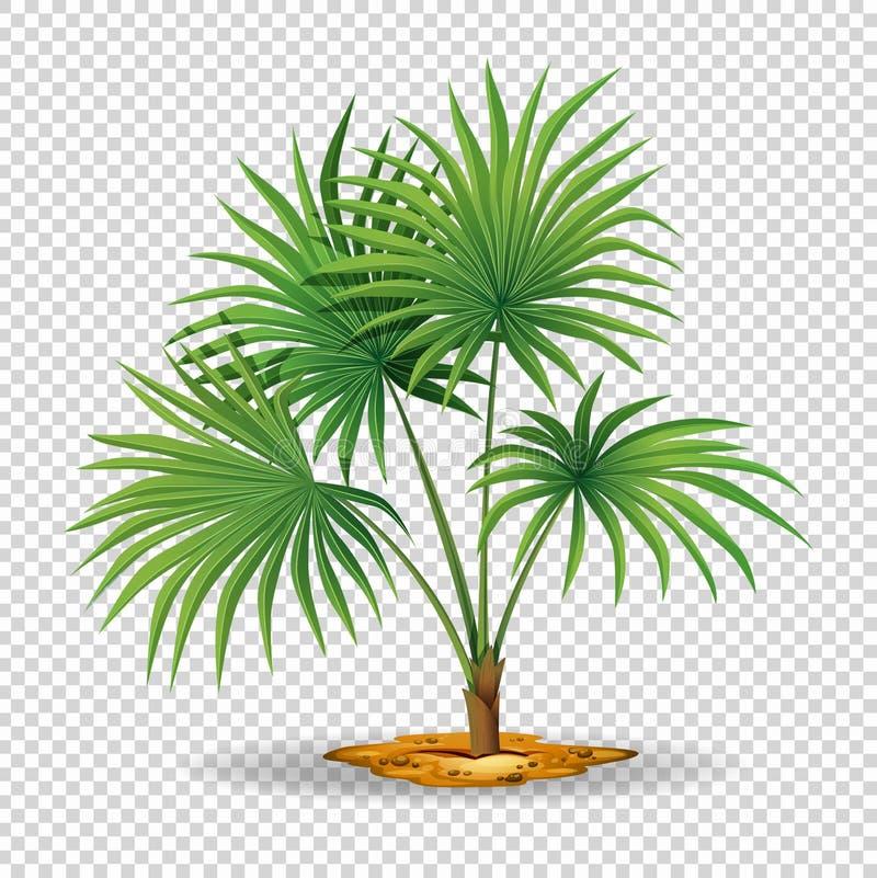 Palmier sur le fond transparent illustration de vecteur illustration du for t jardinage 93036560 - Palmier clipart ...