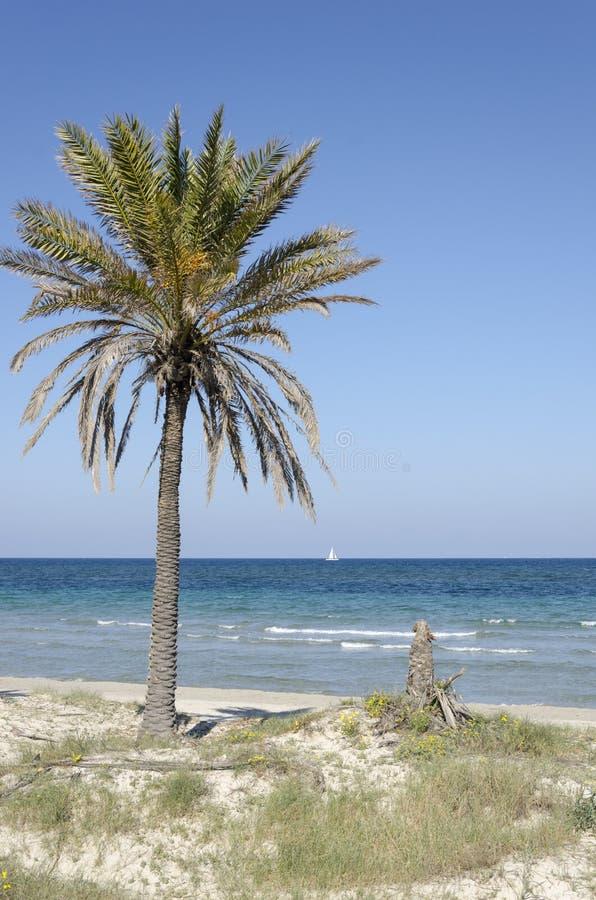 Palmier sur une plage du méditerranéen À l'arrière-plan il y a un voilier et le ciel bleu est complètement clair photos stock