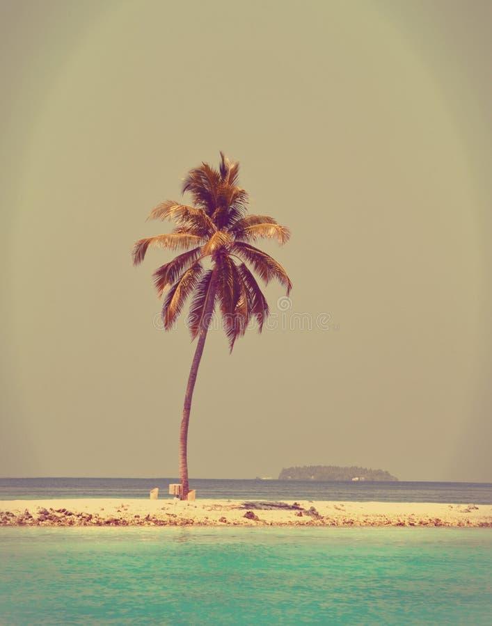 Palmier sur une plage sablonneuse à la mer cyan. Maldives.with un rétro effet photo libre de droits