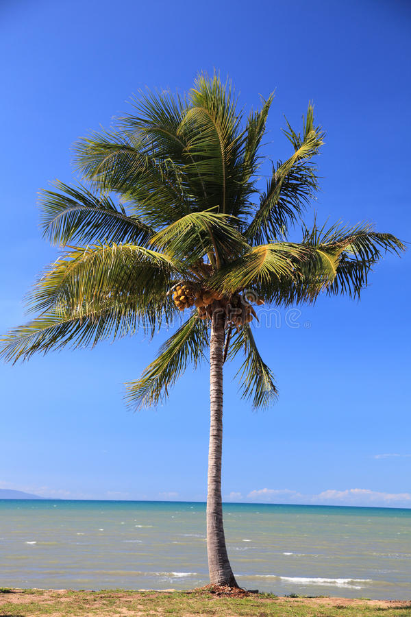 Palmier tropical à la plage photo stock