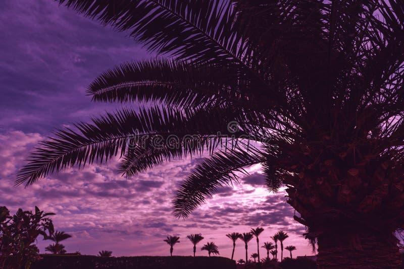 Palmiers à l'aube image stock