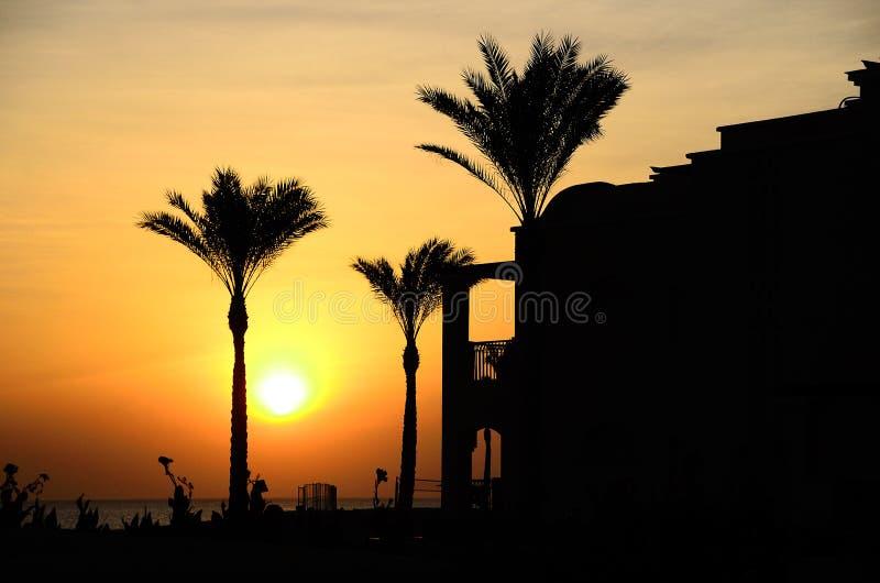 Palmiers à l'hôtel et au lever de soleil chaud images libres de droits