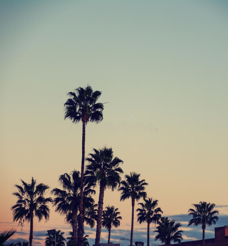 Palmiers à Los Angeles image stock