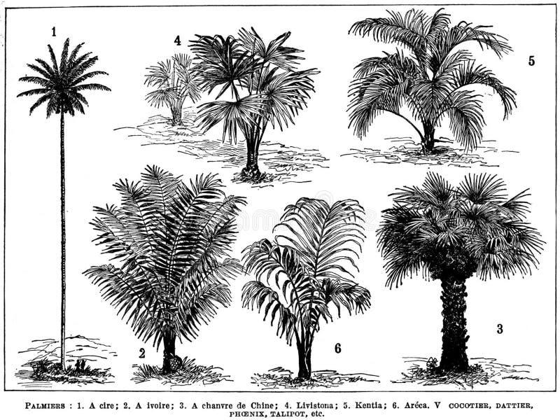 Palmiers Free Public Domain Cc0 Image