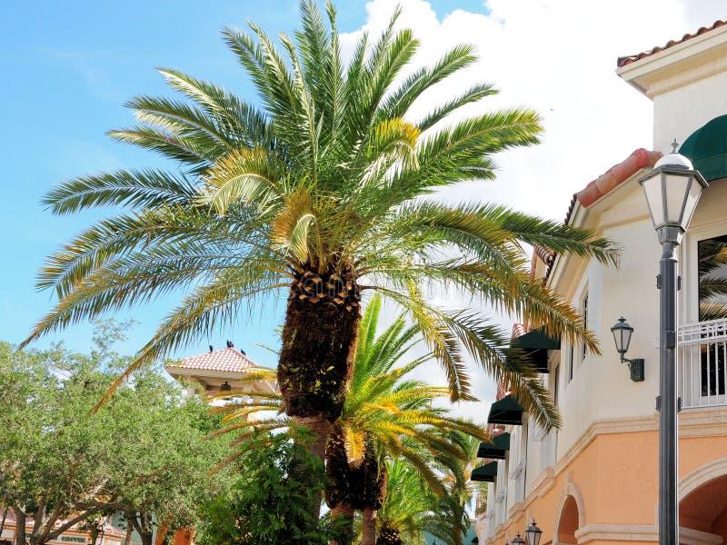 Palmiers au centre de ville en Floride photos stock