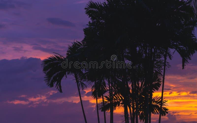 Palmiers au-dessus de ciel tropical pourpre image stock