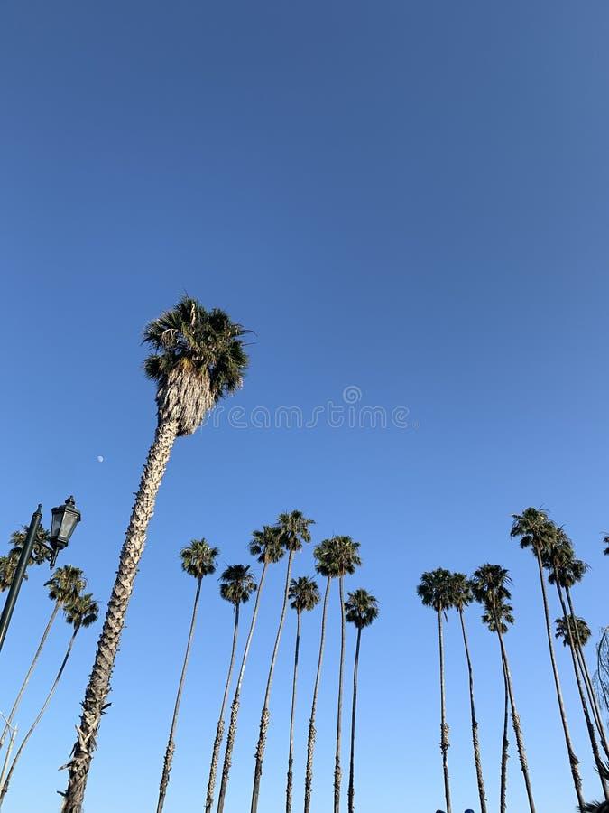 Palmiers avec la lune photographie stock