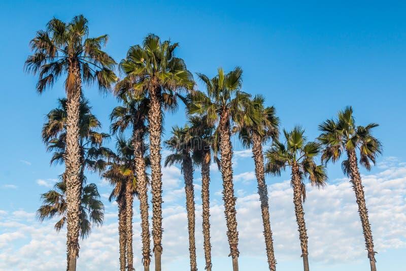 Palmiers avec le fond partiellement nuageux image stock