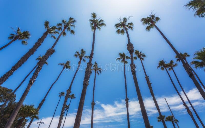 Palmiers, Côte Pacifique, plage de Zuma, la Californie images stock