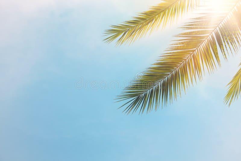 Palmiers contre des rayons de ciel bleu et de soleil voyage, été, vacances et concept tropical de plage photographie stock libre de droits