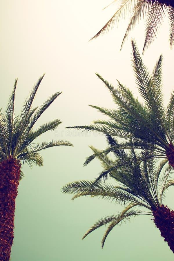 Palmiers contre le ciel été, vacances et conce tropical de plage images libres de droits