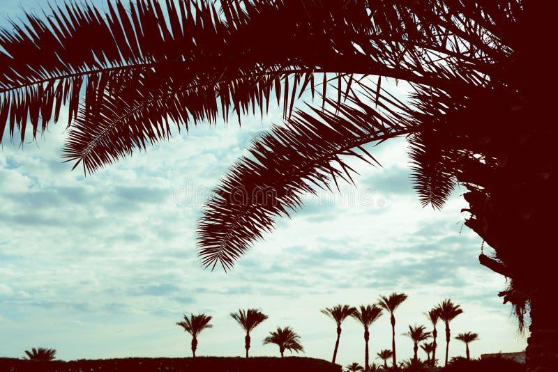 Palmiers contre le ciel photos stock