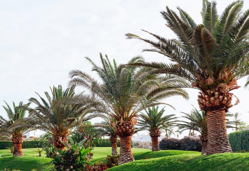 Palmiers contre le ciel photo libre de droits