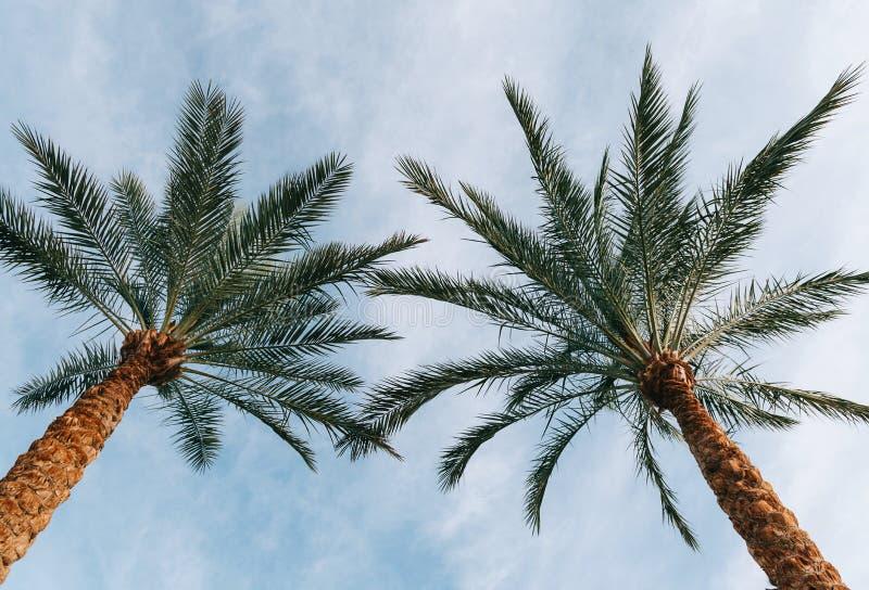 Palmiers contre le ciel images stock