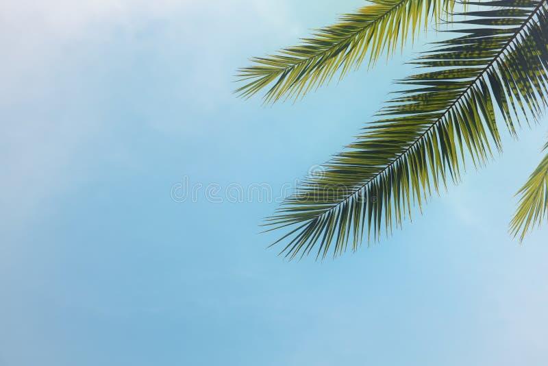 Palmiers contre le ciel bleu voyage, été, vacances et concept tropical de plage images libres de droits