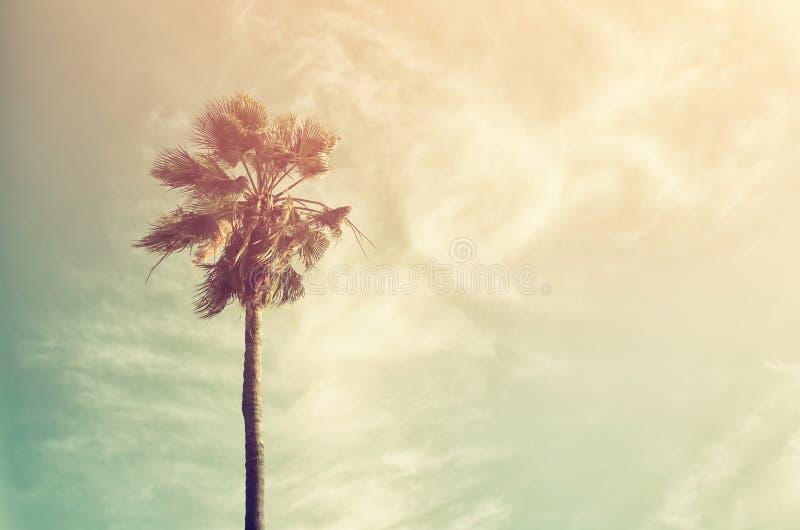 Palmiers contre le ciel Rétro image de type photographie stock