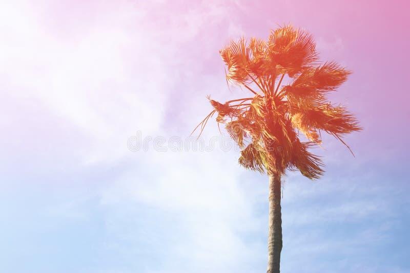 Palmiers contre le ciel Rétro image de type photos libres de droits
