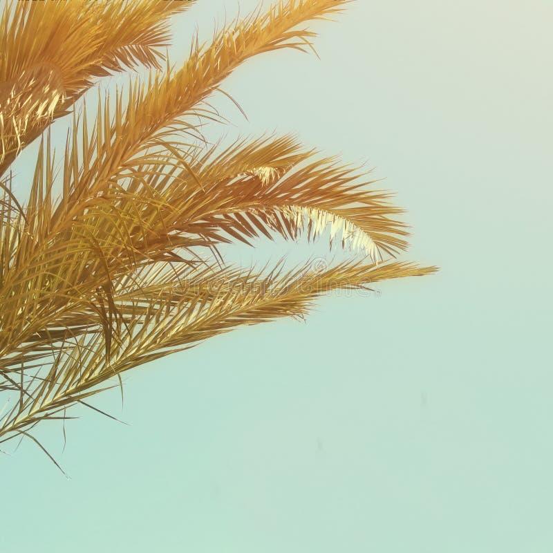 Palmiers contre le ciel Rétro image de type voyage, été, vacances et concept tropical de plage image libre de droits