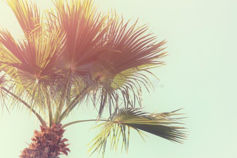 Palmiers contre le ciel Rétro image de type voyage, été, vacances et concept tropical de plage photos libres de droits