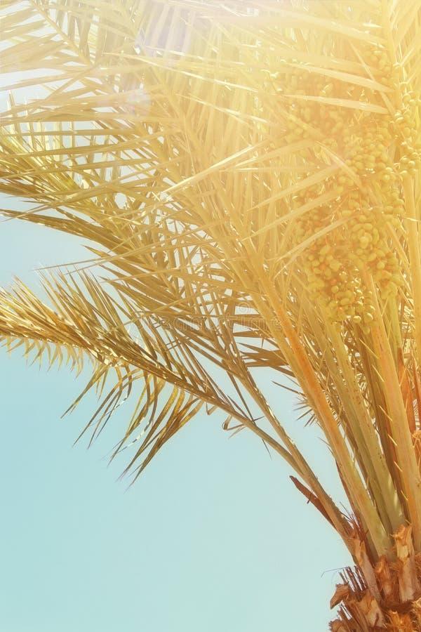 Palmiers contre le ciel Rétro image de type voyage, été, vacances et plage tropicale photographie stock libre de droits