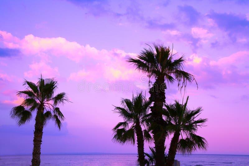 Palmiers contre un ciel pourpre de coucher du soleil image libre de droits