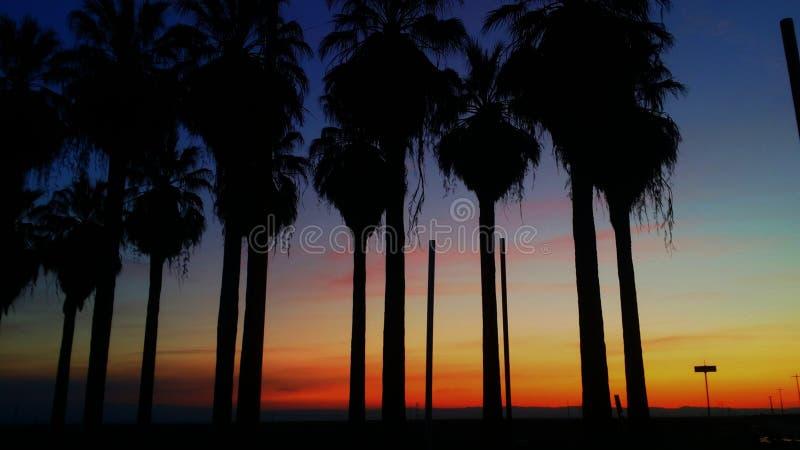 Palmiers/coucher du soleil image stock