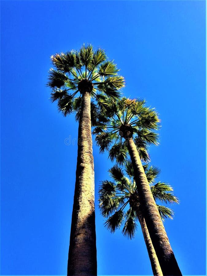 Palmiers d'arbre, ciel bleu, jour ensoleillé et altitude dans la ville de Barcelone, Espagne image libre de droits