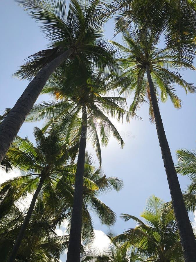Palmiers d'Hawaï sur la plage images libres de droits