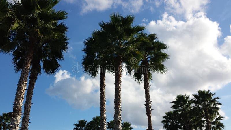 Palmiers dans le ciel photos stock