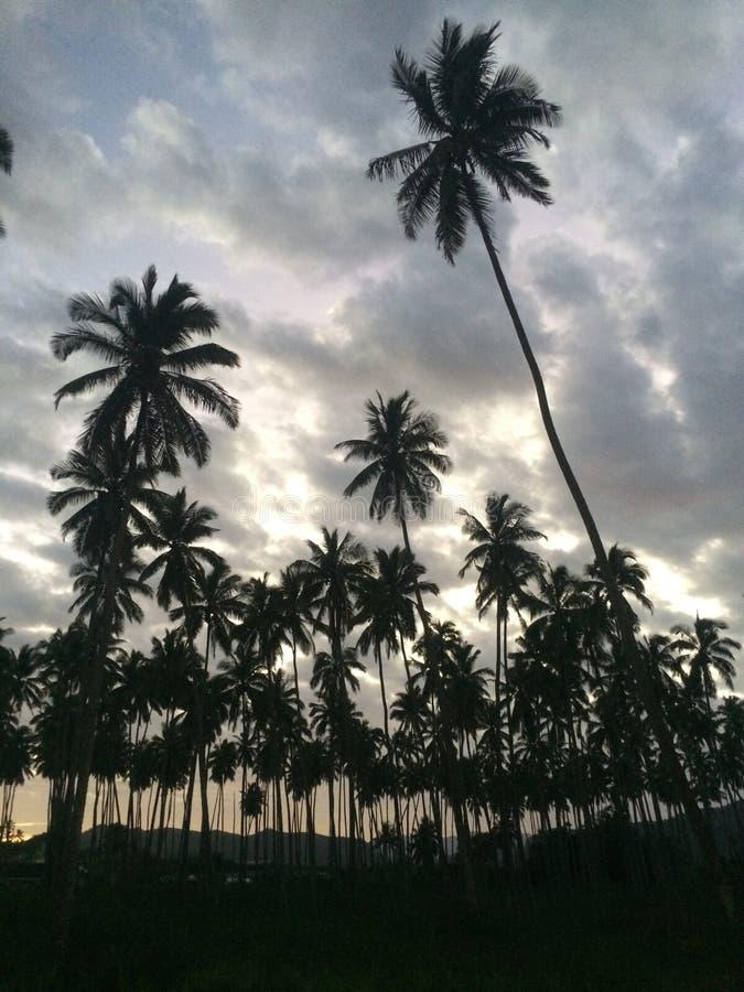 Palmiers dans le paradis photographie stock libre de droits
