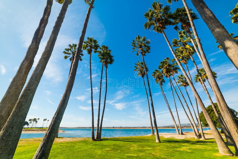 Palmiers dans le rivage de San Diego photographie stock libre de droits