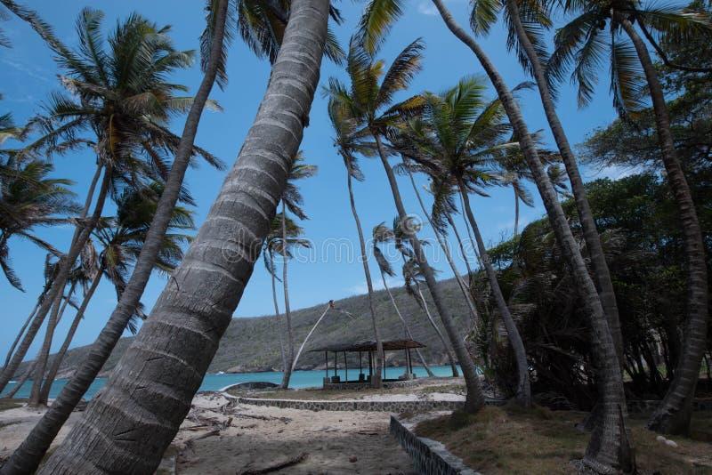 Palmiers dans le vent images libres de droits