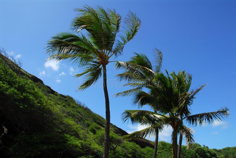 Palmiers dans le vent photos stock