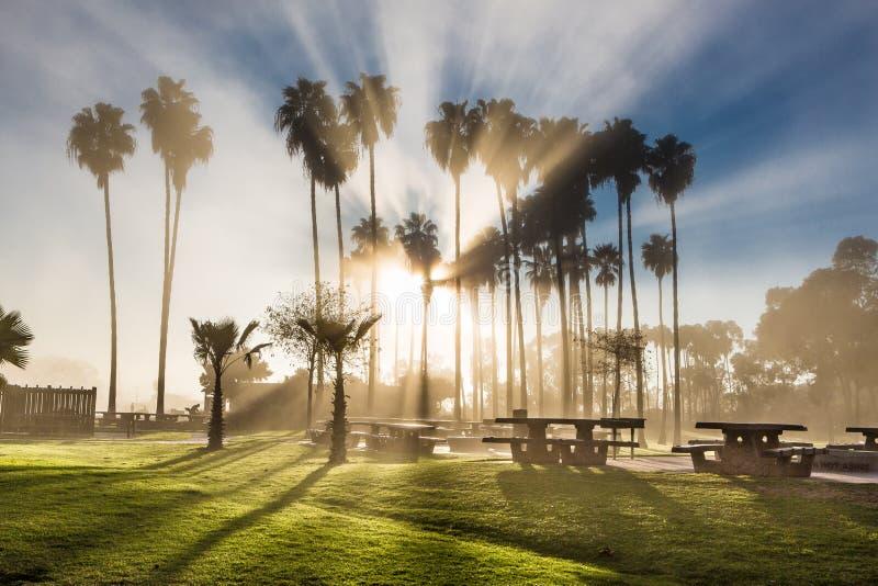 Palmiers de la Californie images libres de droits