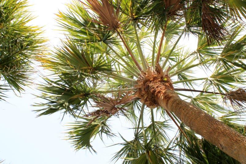 Palmiers de la Floride image stock