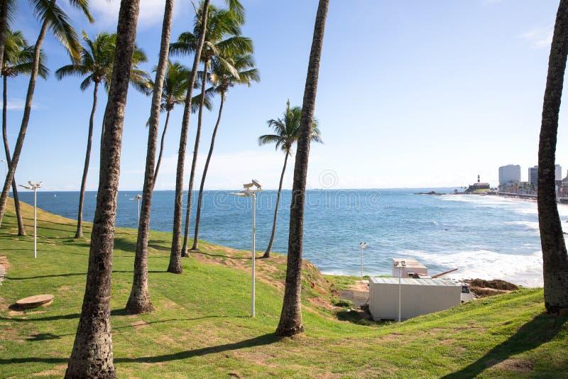 Palmiers de noix de coco, beau fond tropical dans un ciel bleu images libres de droits