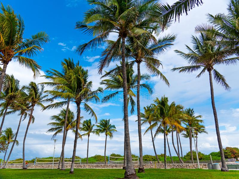 Palmiers de noix de coco en parc de Lummus photo stock