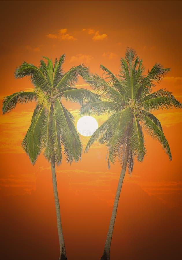 Palmiers de noix de coco de la silhouette deux sur la plage photographie stock libre de droits