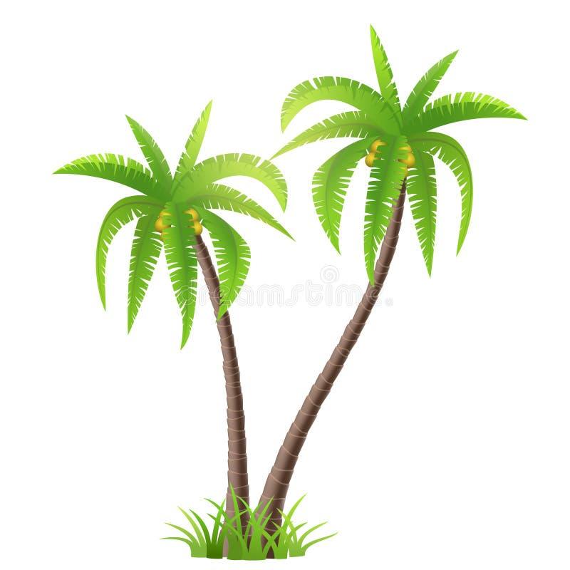 Palmiers de noix de coco illustration libre de droits