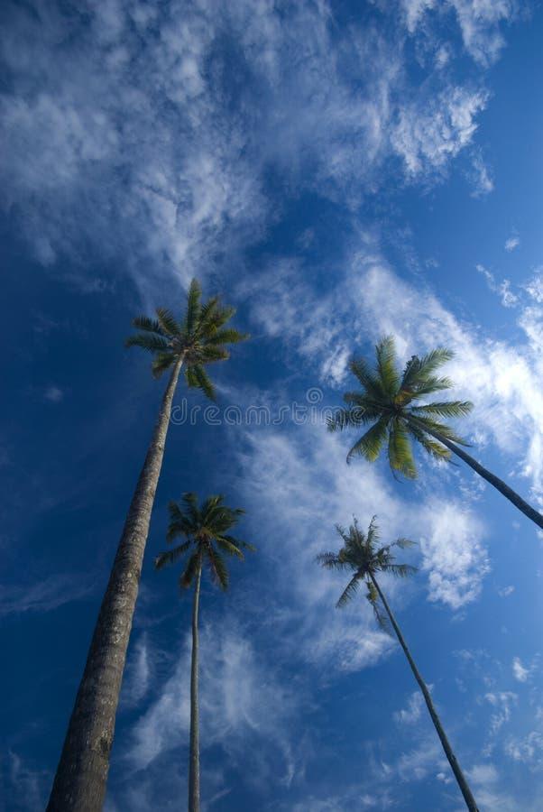 Palmiers de noix de coco atteignant à l'extérieur aux cieux photographie stock