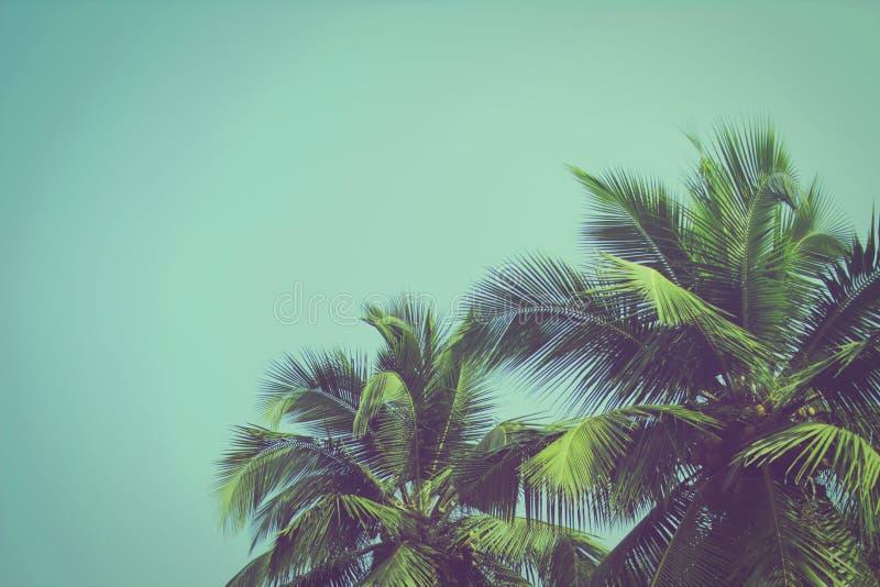 Palmiers de noix de coco au filtre tropical de vintage de - Palmier noix de coco ...