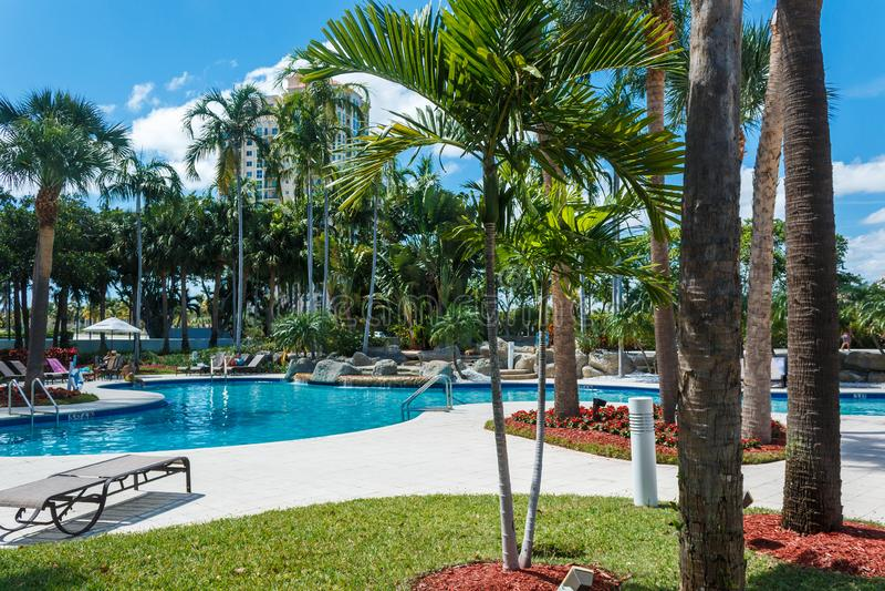 Palmiers de vert de noix de coco sous le soleil, piscine avec de l'eau bleu, beau fond tropical ?t?, tourisme, vacances, photos stock