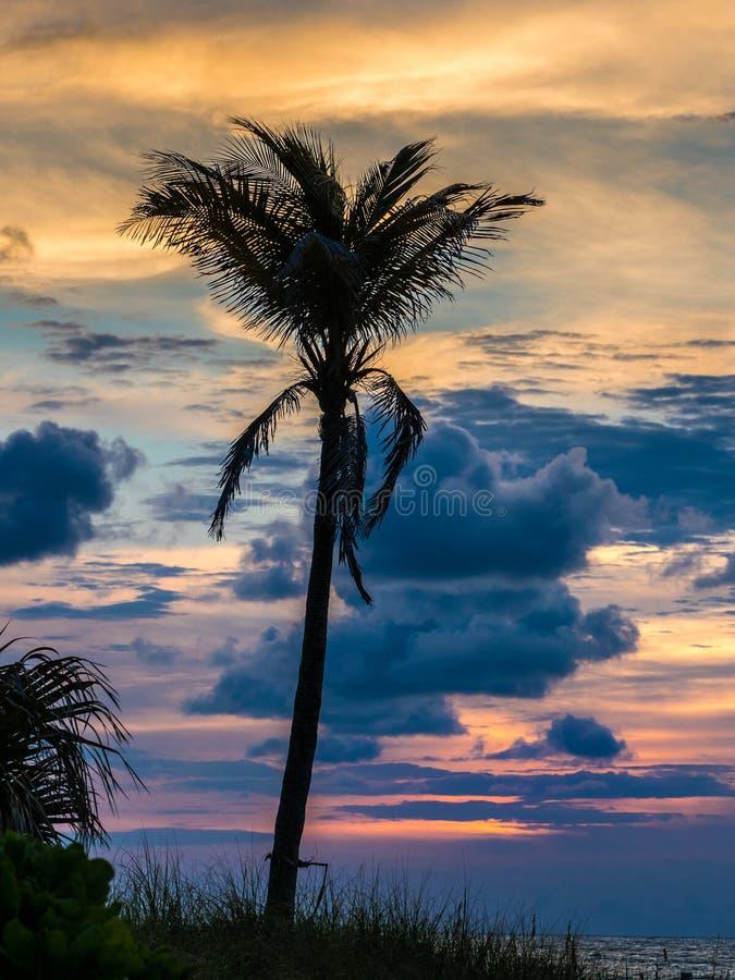 Palmiers devant le ciel de lever de soleil images libres de droits