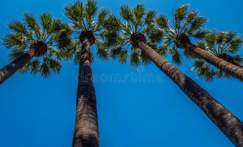 Palmiers en parc national d'Athènes images libres de droits