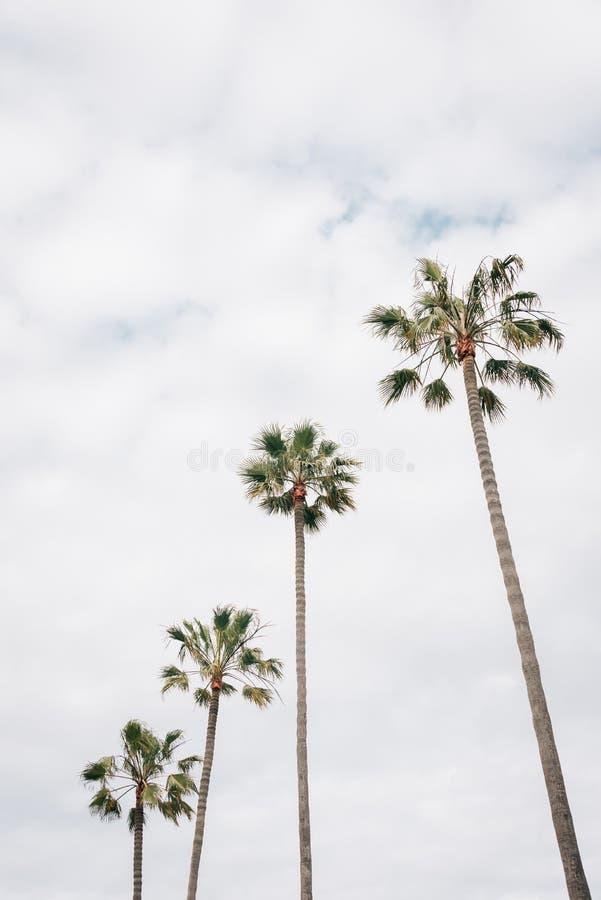 Palmiers en plage de Newport, la Californie photo libre de droits
