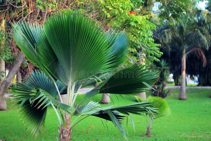 Palmiers en stationnement image libre de droits